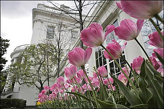 Jacqueline Kennedy Garden - Spring in the Jacqueline Kennedy Garden. Pink tulips massed against the east colonnade of the White House.