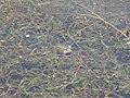 Khmelnytskyi, Khmel'nyts'ka oblast, Ukraine - panoramio (11).jpg