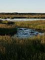 Kokemäenjoen deltaa.jpg