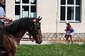 Konj dorat Varna.jpg