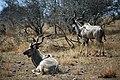 Kruger National Park, South Africa (36550320330).jpg
