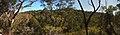 Ku-Ring-Gai Wildflower Garden - panoramio.jpg