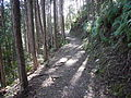 Kumano Kodo kogumotorigoe World heritage13.JPG