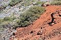 La Palma - Garafía - Carretera Acceso Observatorios + Adenocarpus viscosus 05 ies.jpg