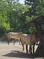 Laika ac Cologne Zoo (6419616867).jpg