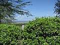 Lake Nakuru Lodge (7512935888).jpg