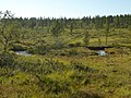 Lapland - Urho Kekkonen National Park - 20180728171728.jpg