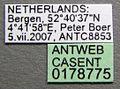 Lasius niger casent0178775 label 1.jpg