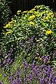 Lavendelbeet im Innenhof 09.jpg