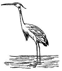 Lear 3 - Heron.jpg