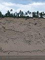 Lena River bank sandy bluffs (synchroswimr).jpg