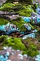 Lichen (24359303380).jpg