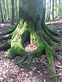 Liebe den Wald.jpg