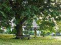 Linde am Gelben Kreidebusen, Rottenburg am Neckar.jpg