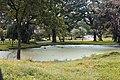 Little lake.jpg