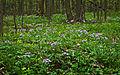 Lob Апрель в лесу.jpg