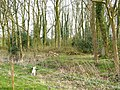 Log pile - geograph.org.uk - 377090.jpg
