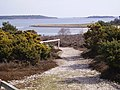 Long Island and Brownsea Island - geograph.org.uk - 579538.jpg