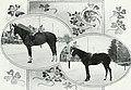 Lovers of the horse - brief sketches of men and women of the Dominion of Canada devoted to the noblest of animals. - (1909) (14579177958).jpg