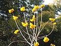 Luang Prabang Botanic Gardens (33440003761).jpg