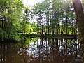 Lumber River (3) (28111400522).jpg