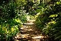 Lyon Arboretum (8330372089).jpg