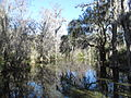 Magnolia Plantation and Gardens - Charleston, South Carolina (8555484901).jpg