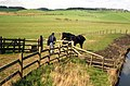Man with horses - geograph.org.uk - 1656202.jpg