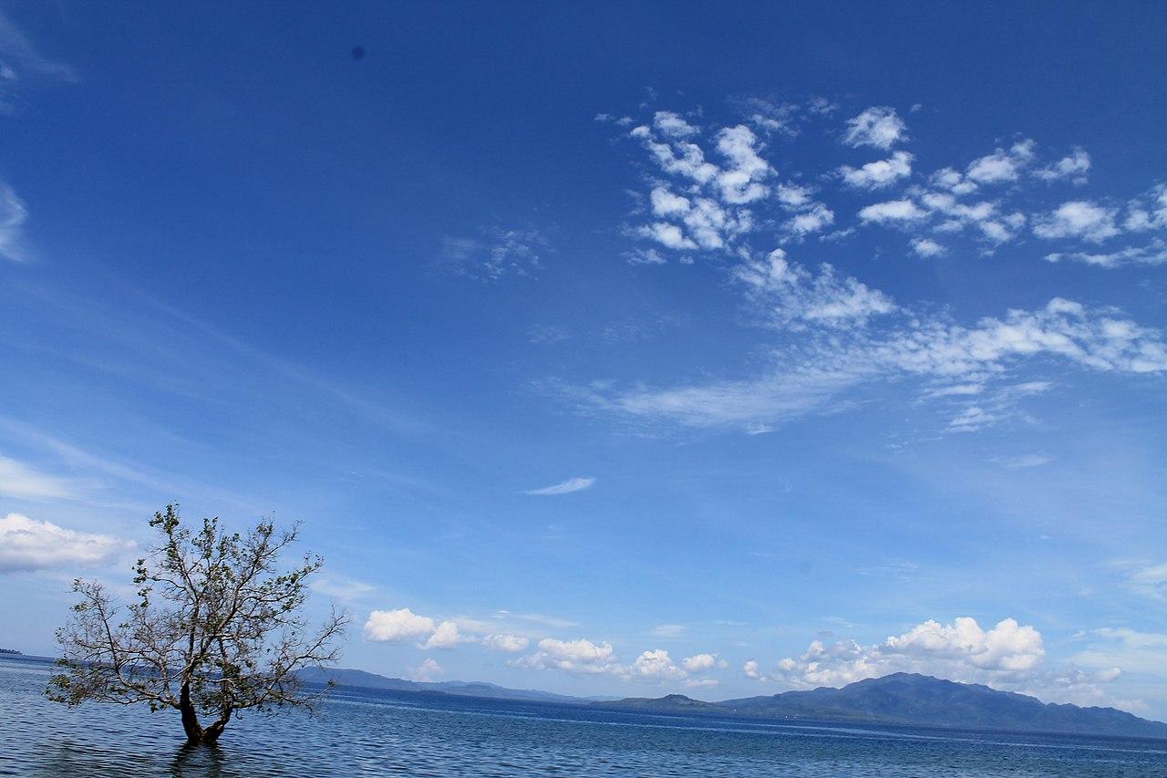 File:Mangrove, Maluku Province, Indonesia.jpg - Wikimedia Commons