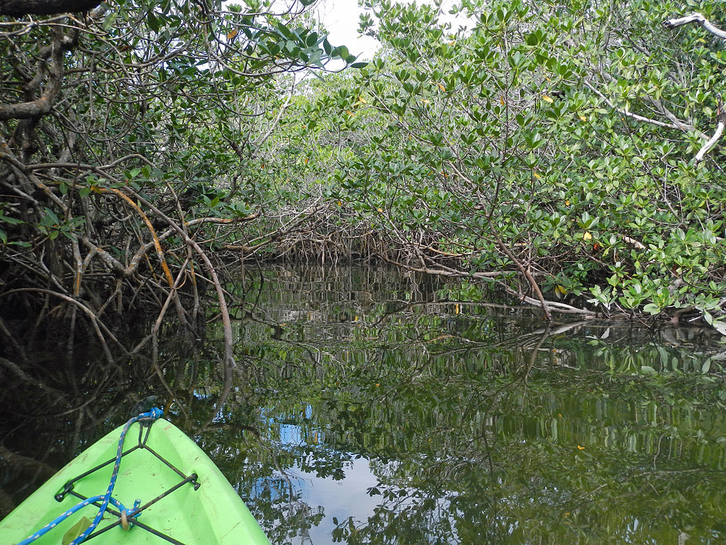 Mangroves in Pennekamp State Park