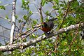 Many Types of birds that can be seen from the New River Trail. (27653757116).jpg