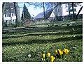 March Crocus Botanischer Garten Freiburg - Master Seasons Rhine Valley Photography 2013 - panoramio.jpg