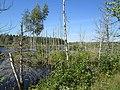 Marsh near Lake Verde, PEI (9702268180).jpg