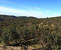 Mato Contenda - panoramio.jpg