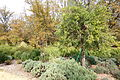McConnell Arboretum & Botanical Gardens - Redding, California - DSC02947.JPG