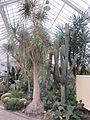 Meise Plantentuin Succulenten.JPG
