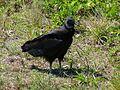Merritt Island National Wildlife Refuge - Flickr - Rusty Clark (22).jpg