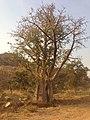 Metekel, Ethiopia - panoramio (2).jpg
