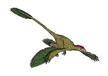 Microraptor updated version.JPG