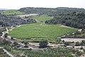 Minerve, France - panoramio (5).jpg