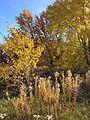 Minnehaha Park in autumn 14.jpg