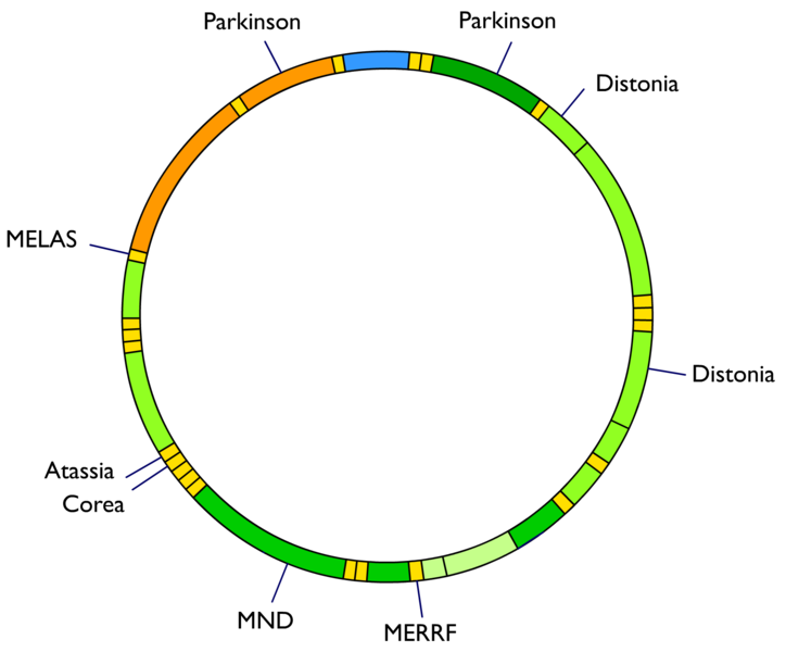 mtDNA and disease