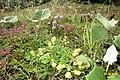 Mixed vegetation (Grubigstein) (23971851214).jpg