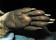 Mm Hand.jpg