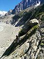 Mobeye-ÉtéDesVilles-Chamonix-Mont-Blanc-635.jpg