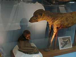 Monkey and dog mummies, Cairo Egyptian Museum 01.JPG