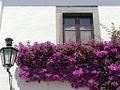 Monsaraz windows and bougainvilia (EDARF).jpg