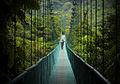Monte Verde Verde!.jpg