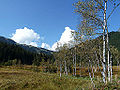 Moorlandschaft am Pass Thurn 03.JPG