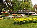 Morges-Fete Tulipe 6.jpg